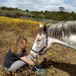 Passeio a cavalo em São Miguel